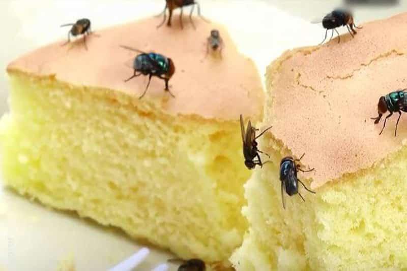 Cách diệt và đuổi ruồi hiệu quả