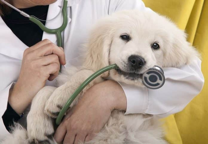 Liên hệ với bác sĩ đã chăm sóc thú cưng của bạn