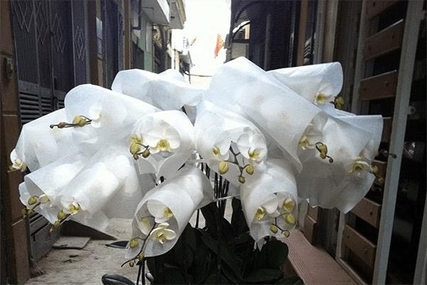 cách vận chuyển hoa lan an toàn