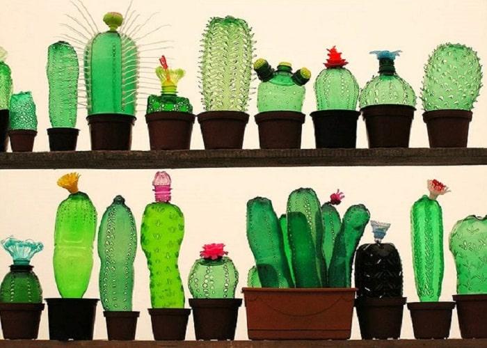tái chế chai nhựa thành những cây xương rồng