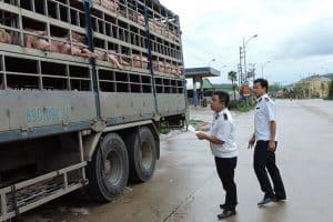 Những quy định vận chuyển gia súc