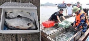 Cách vận chuyển hải sản tươi sống đi xa vẫn giữ độ tươi