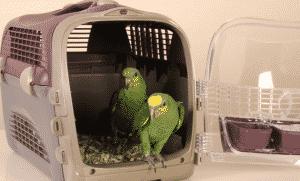 Vận chuyển lồng chim