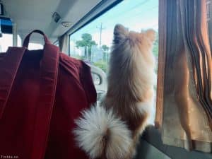 Vận chuyển thú cưng bằng xe khách