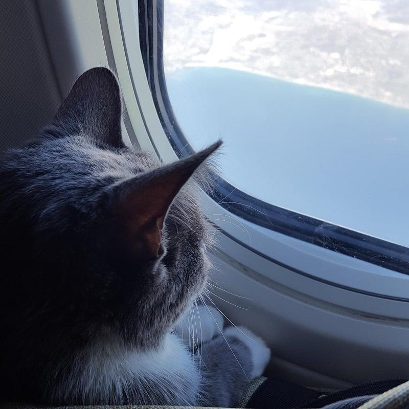 Vận chuyển mèo bằng máy bay