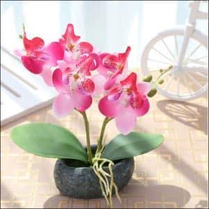 Hoa lan để bàn làm việc