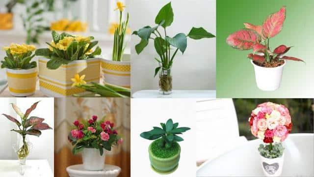 Top 10 loài hoa để bàn làm việc trong phong thuỷ mang lại tài lộc