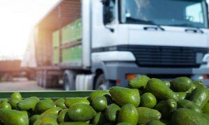 [Hướng dẫn] Cách bảo quản trái cây khi vận chuyển đi xa